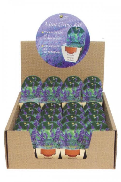 Groeikadootje XL Lavendel - Display