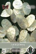 Judaspenning - Lunaria zaden