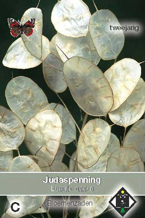 Honesty - Lunaria seeds