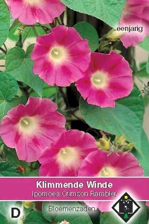 Klimmende winde (Ipomoea) Crimson Rambler