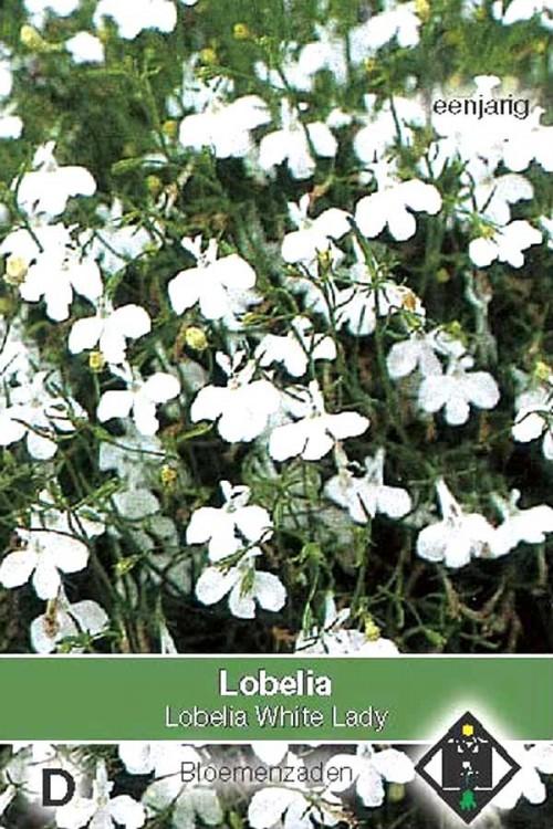White Lady Lobelia zaden