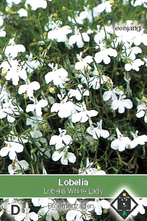 White Lady - Lobelia