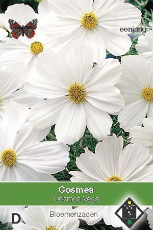 Cosmos (Cosmea) Vega