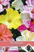Four o'clock flower Mirabilis seeds