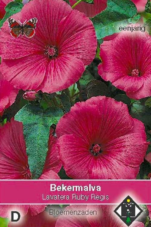 Ruby Regis Lavatera - Bekermalva zaden