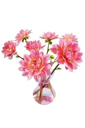 Roze Dahlia - Flat Flower Raamsticker
