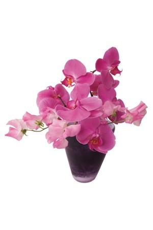 Flat Flowers Raamstickers Orchidee Paars- Roze