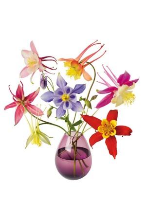 Flat Flowers Raamstickers Akelei - Aquilegia