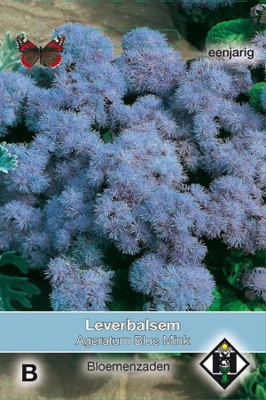 Floss Flower (Ageratum) Blue Mink