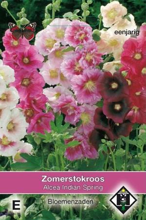 Stokroos (Alcea Rosea) Indian Spring
