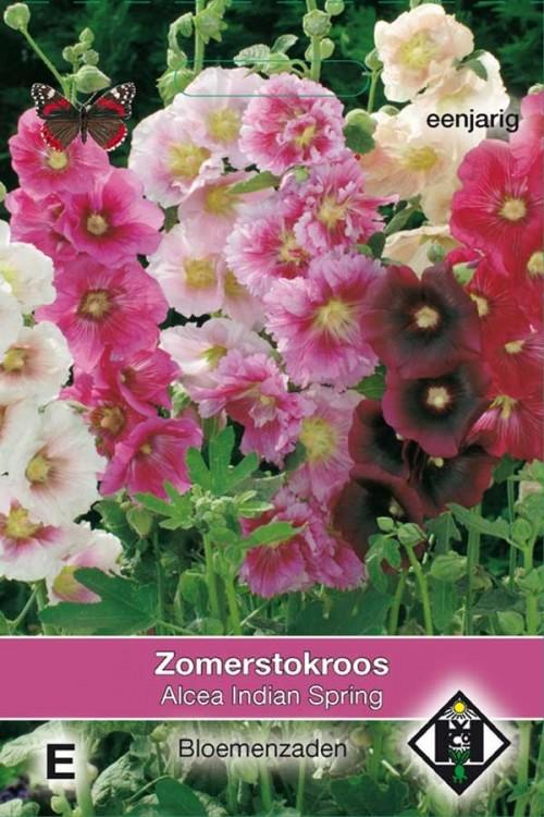Indian Spring Alcea rosea - Stokroos zaden