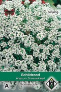 Snowcloth - Sweet Alyssum seeds
