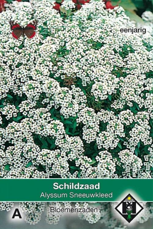 Sneeuwkleed - Alyssum zaden