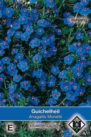 Blue Pimpernel (Anagallis) Monelli