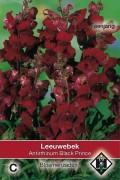 Black Prince Antirrhinum Leeuwenbek zaden