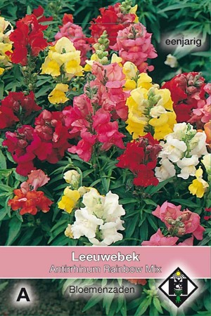 Snapdragon (Antirrhinum) Rainbow Mix