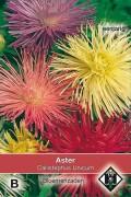 Unicum Callistephus - Straalaster zaden