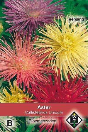 Unicum Callistephus - Aster seeds