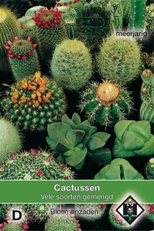 Cacti Cactus seeds