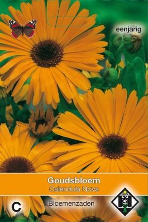 Marigold (Calendula) Nova