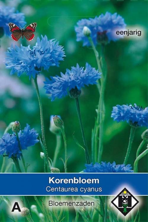 Single Blue - Centaurea