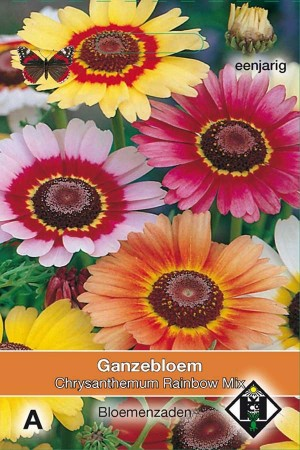 Ganzebloem (Chrysantemum) Rainbow Mix