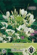 White Queen Cleome - Spider Flower seeds