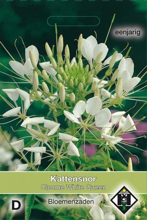 White Queen Cleome - Kattensnor zaden