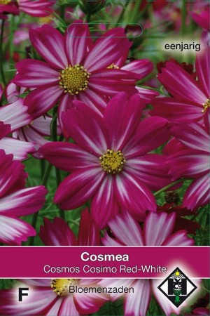 Cosmos (Cosmea) Cosimo Red-White