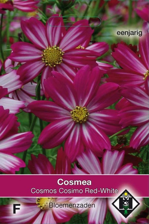 Cosimo Red White Cosmos seeds