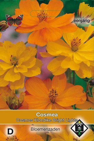 Cosmos (Cosmea) Klondike Bright Lights