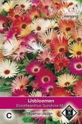 Sunshine Livingstone Daisy - Dorotheanthus seeds