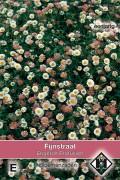 Profusion Fleabane Erigeron seeds