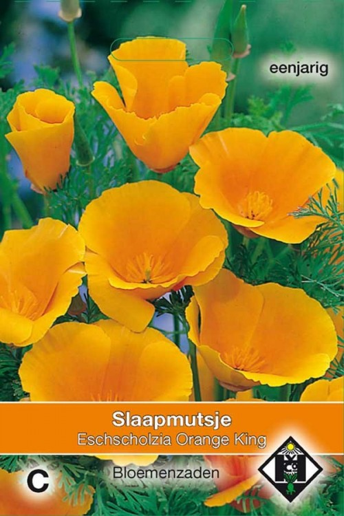 Orange King California Poppy Eschscholzia seeds