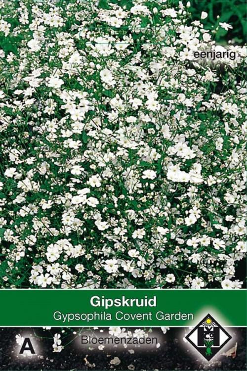 Covent Garden Baby's breath Gypsophila seeds