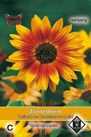 Zonnebloem (Helianthus) Herfstschoonheid