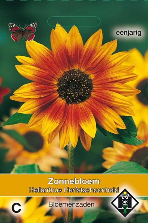 Herfstschoonheid Zonnebloem Helianthus zaden