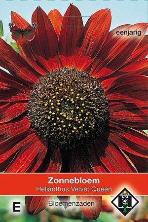 Zonnebloem (Helianthus) Velvet Queen
