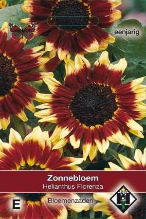 Zonnebloem (Helianthus) Florenza