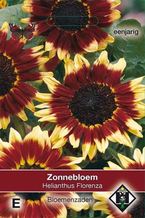 Florenza Sunflower Helianthus seeds