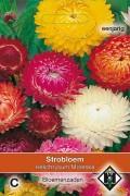 Moreska Helichrysum - Strobloem zaden