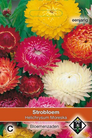 Strawflower (Helipterum) Moreska
