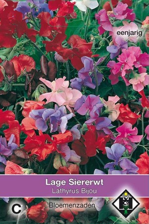 Reuk- of siererwt (Lathyrus) Bijou