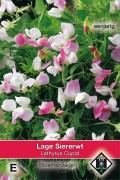 Cupid Dwarf Sweet pea Lathyrus seeds
