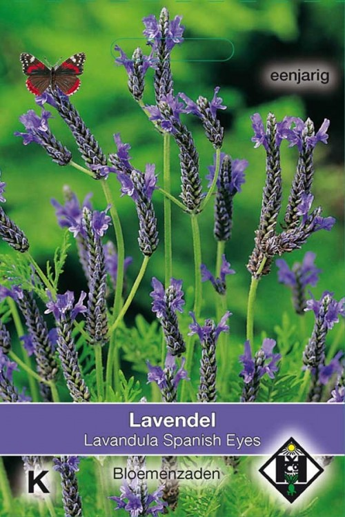 Spanish Eyes - Lavender seeds