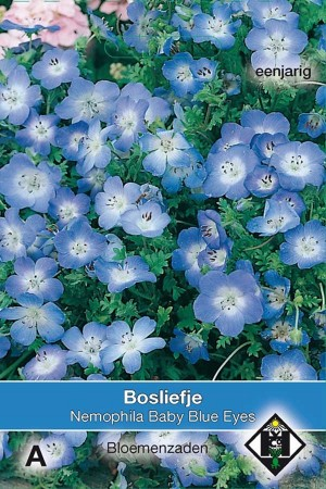 Haagbloem (Nemophila Insignis) Baby Blue Eyes