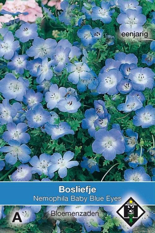Baby Blue Eyes Haagbloem Nemophila zaden