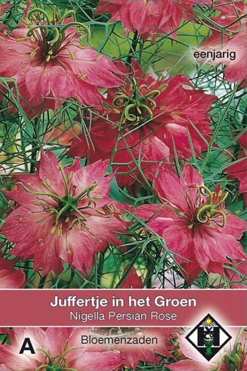 Persian Rose Nigella - Juffertje in het groen zaden