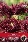 Poppy (Papaver) Black Swan