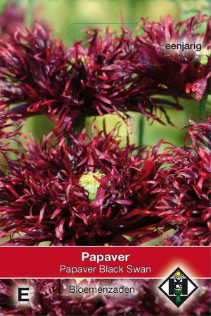 Poppy (Papaver) Black Swan